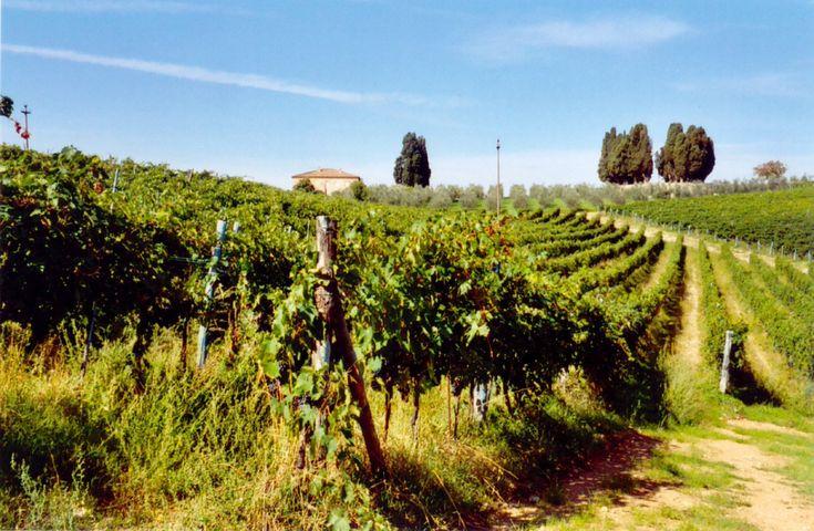 Wine Tasting Montepulciano - Alla scoperta del gusto