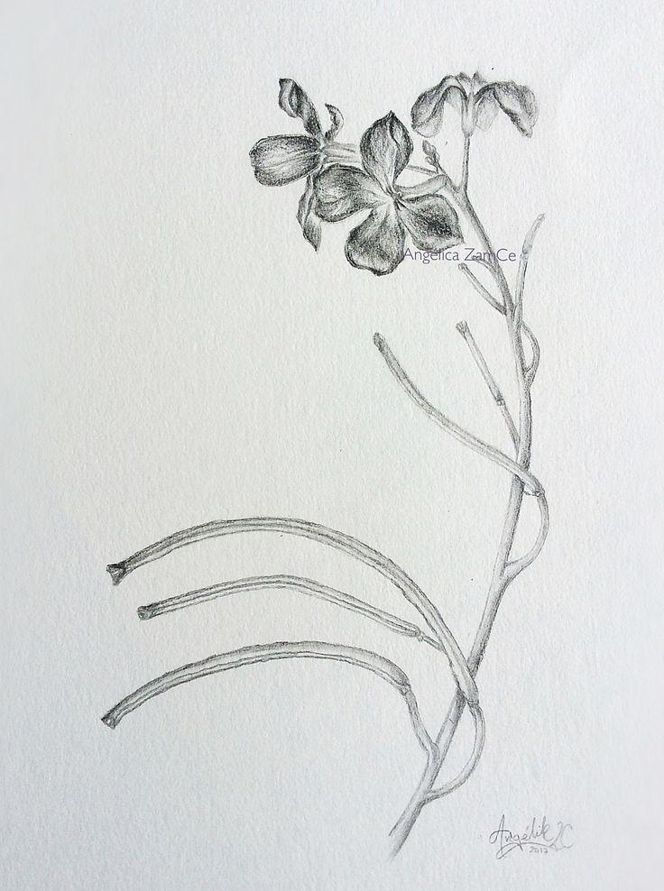 Plant in graphite. Scientific illustration.