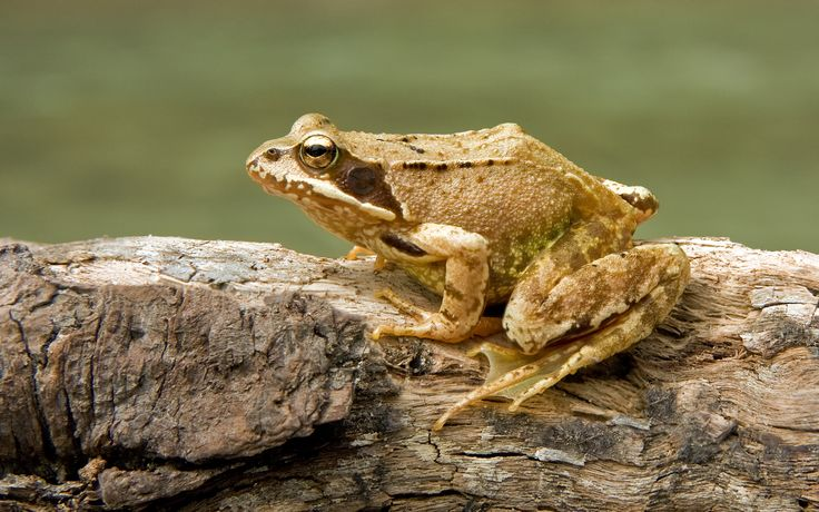 Faeries and all that stuff: A very strange frog indeed...