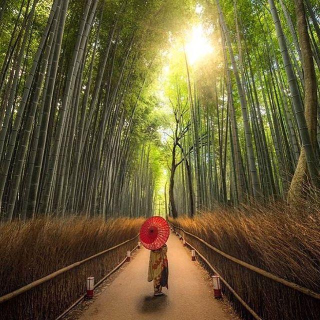 Kyoto ☀️ •••••••••••••••••••••••••••• �� Tagga le tue foto di viaggio con hashtag #traveltapit. Le migliori saranno pubblicate su questa pagina menzionandoti! ••••••••••••••••••••••••••••• ▶️ Segui anche il mio profilo personale: @mattiacalzolari •••••••••••••••••••••••••••• #viaggi #avventure #italia #blogitalia #vacanze #amici #avventura #mondo #pianeta #foto #fotografia #estate #inverno #montagna #mare #america #ig_italia #volgoitalia #beautifulpics #pictures #world #travel #follow…