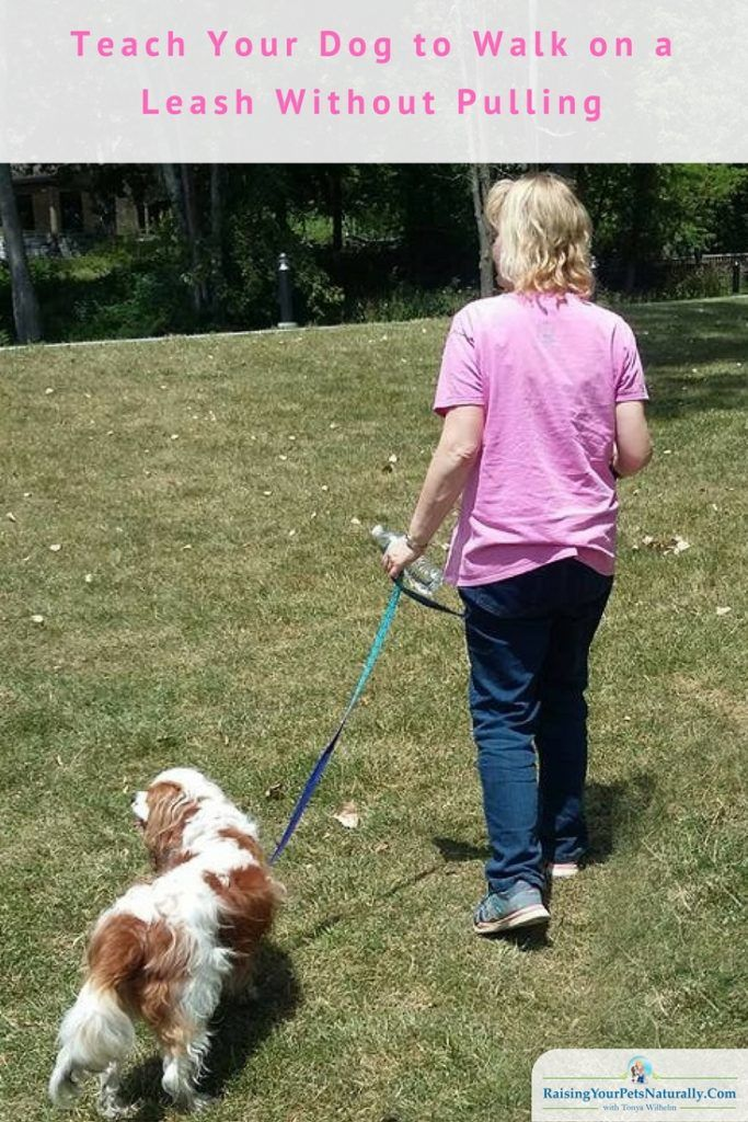 Walking On A Leash How To Teach Your Dog To Walk On A Leash Honden