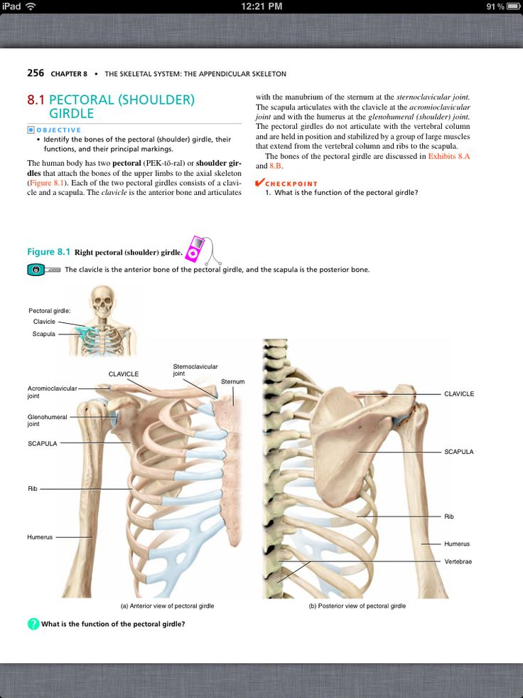 35 best Chapter 8, The Skeletal System: The Appendicular Skeleton ...