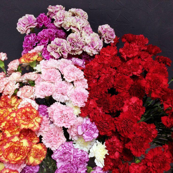 Оптом компания цветы гвоздики, цветы