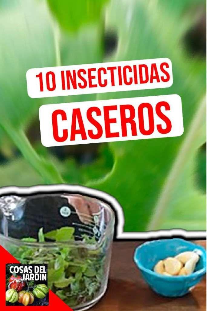 10 Insecticidas caseros orgánicos para controlar las plagas de tu huerto o jardín