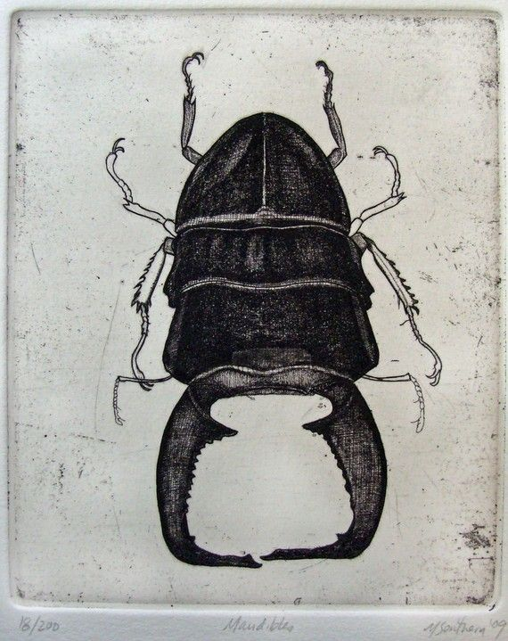 Beetle Etching by printman on Etsy