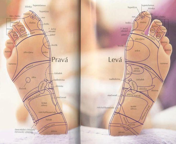 Šikovným stiskem se dá ulevit od bolesti i zlepšit zdravotní stav.    Svoje nohy týráme v úzkých botách, denně je používáme, ale často opomíjíme důkladnou péči o ně.  Chodidla jsou totiž jako mikrokosmos, pod kůží se na nich jako hadi svíjejí tisíce jemných nervů, díky kterým si lehce můžeme pomoci od bolestí a aktivovat uzdravující síly. Než však s léčbou začnete, je dobré si předem nechat ukázat masáž refexních zón na chodidlech od odborníka, abyste věděli, kde a jak silně stisknout.