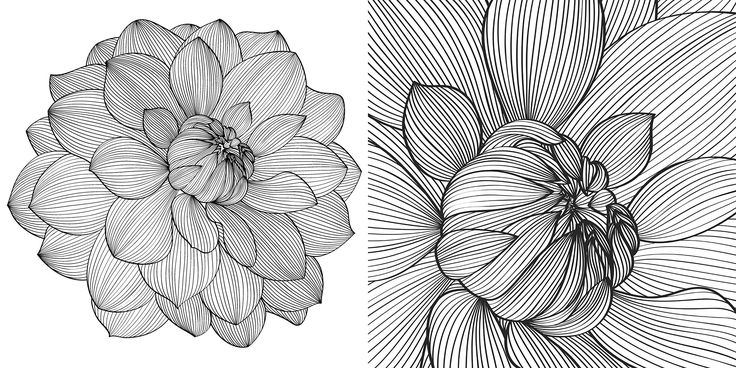 473 Best Images About Flowers To Color On Pinterest
