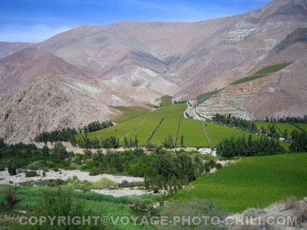 Elqui Valley, Valle del Pisco, Chile