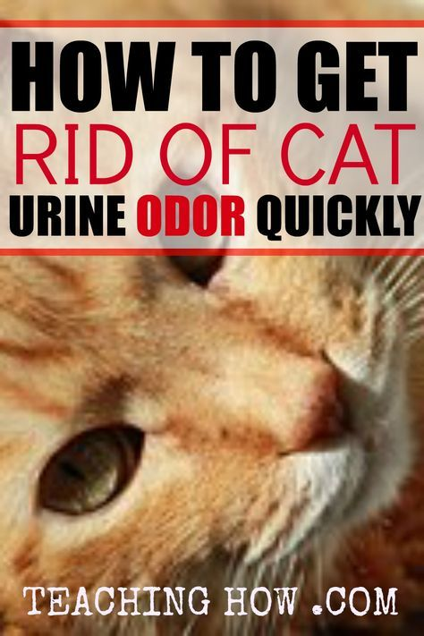 natural remedies to get rid of cat pee smell