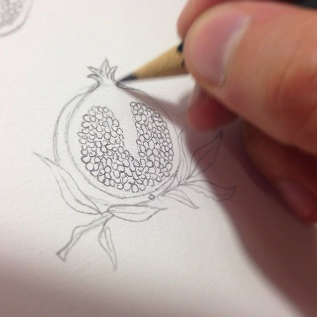www.behance.net/luchosalazar pomegranate drawing pencil