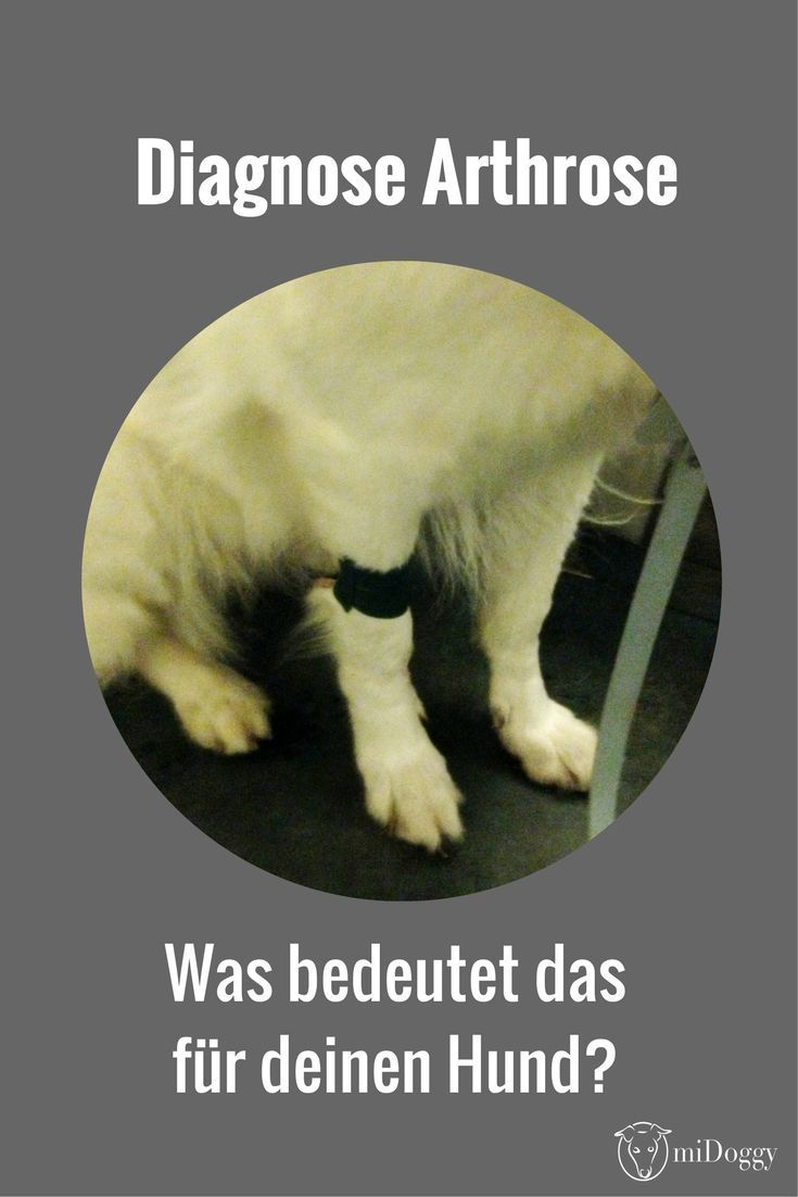 Dein Hund hat von deinem Tierarzt die Diagnose Arthrose bekommen? Was bedeutet das? Hier erfährst du es.