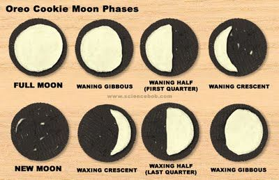 Cookie Moon PhasesHarvest Moon, Solar System, Science Lessons, Schools, Teaching Kids, Oreo Cookies, Oreo Moon, The Moon, Moon Phase