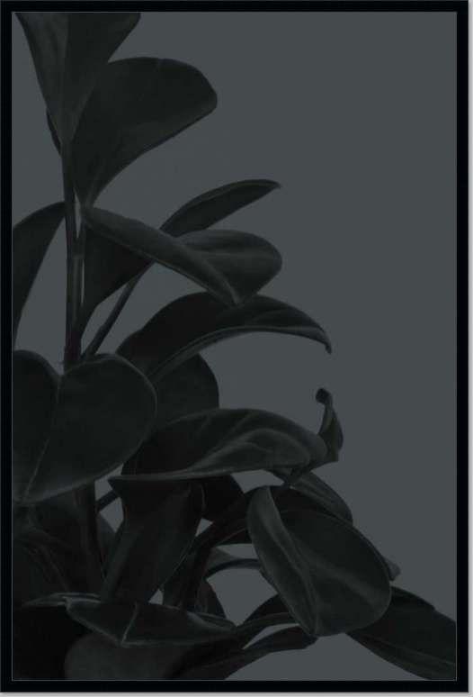 House Plants I