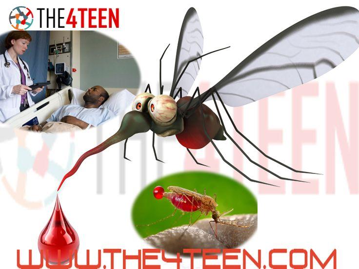 Malaria Types Symptoms  treatment
