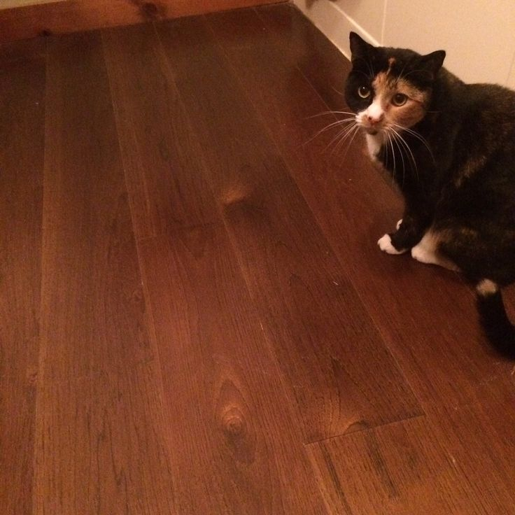 Carlisle HIckory floors
