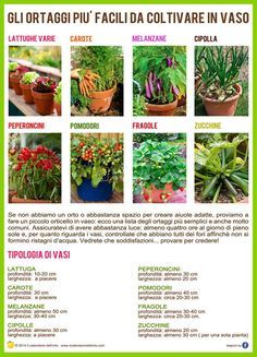 Gli ortaggi più facili da coltivare in vaso