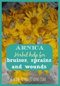 arnica for bruises sprains and wounds~JoybileeFarm