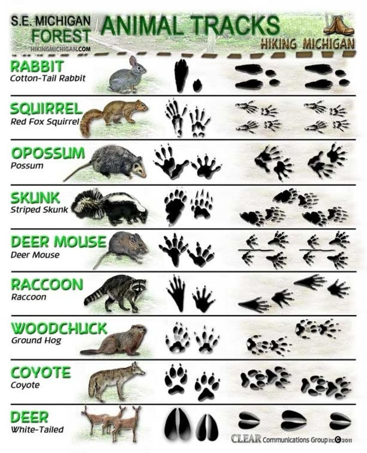 ANIMAL TRACKS ID Sheet2 – Do You Know Your Animal Tracks??? Wonder