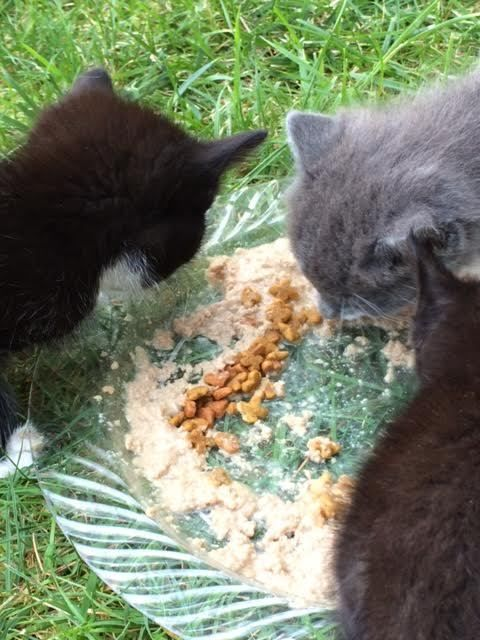 FREYA'S FERAL CAT HEALTH RECIPE HELPS FEED COLONY CATS RESCUE NONPROFIT 8 Pages #FreyasCatRescue