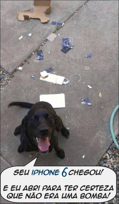 Que Meu Cachorro Taz Nunca Faça Isso Hahaha Imagens Minhas