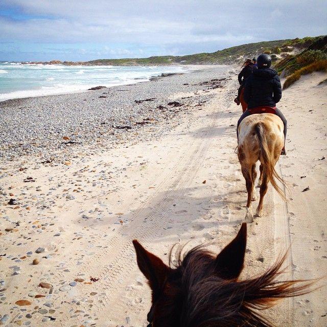 Exploring Tasmania's King Island on horseback. #horseriding #tasmania #kingisland #discovertasmania Image Credit: emilykateschade