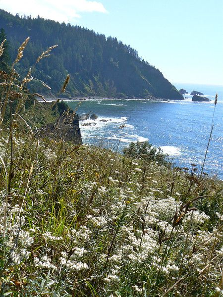 Happy National Get Outdoors Day. Let's take a hike to Cascade Head in #Oregon: http://myitchytravelfeet.com/2012/06/09/national-get-outdoors-day-hike-oregon/