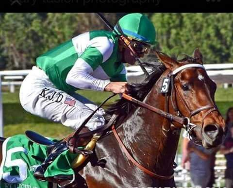 Exaggerator. Second in 142 Kentucky Derby 2016 and first in Preakness Stakes 2016