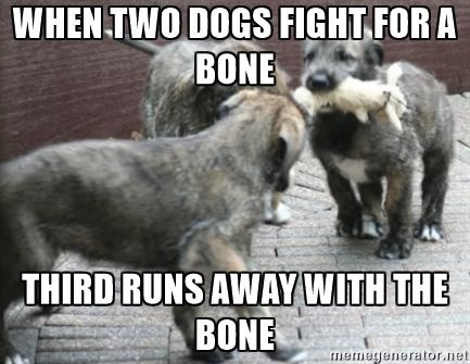 dogs bone - when two dogs fight for a bone third runs away with the bone