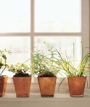 8 steps to a vegetable & herb container garden: Herb Container, Window, Gardening Ideas, Vegetables, Gardens, Herbs Garden, Container Gardening