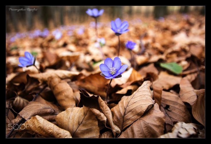 Spring flowers - null