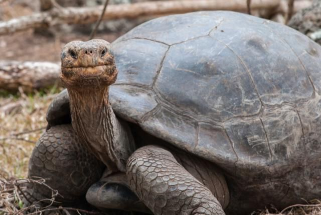 16 Fun Facts About Tortoises | Mental Floss