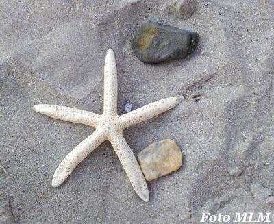 Femlora: De pe la mare... din nou!