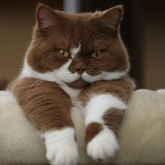 #Cats #Katzen #Animal #Cute #Fluffy #Katzenliebe #Samtpfote #paw #Kitten #Katzenbabys #=^..^=