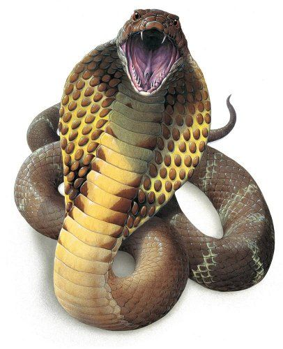 Santas Tools and Toys Workshop: Home: King Cobra Snake (ophiophagus Hannah) - 18H x 15W - Peel and Stick Wall Decal by Wallmonkeys