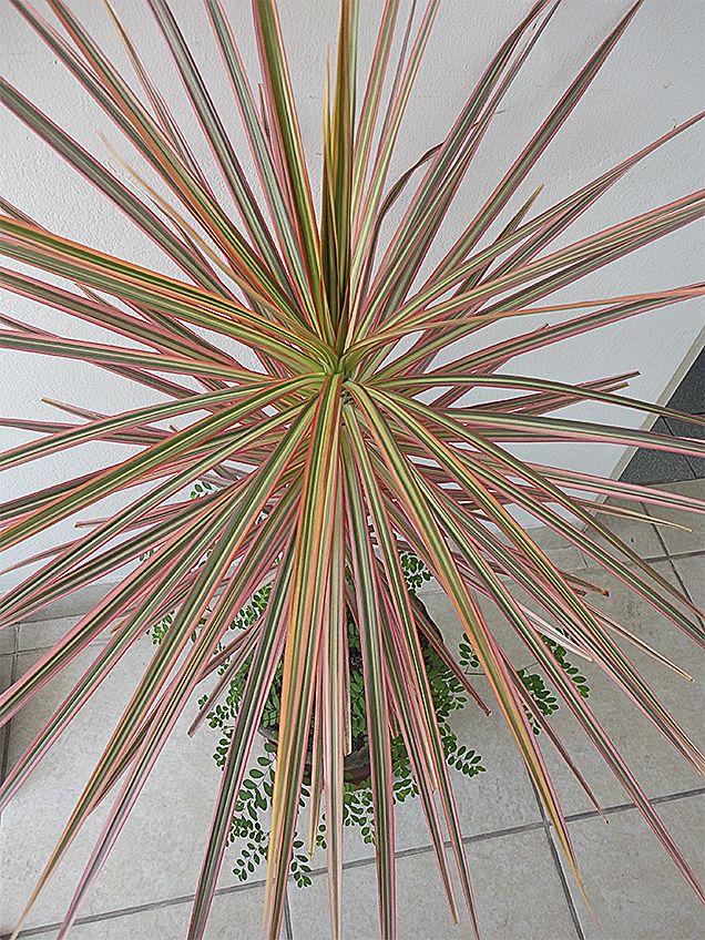 23 best PLANTAS DE INTERIOR parte I images on Pinterest | Indoor ...