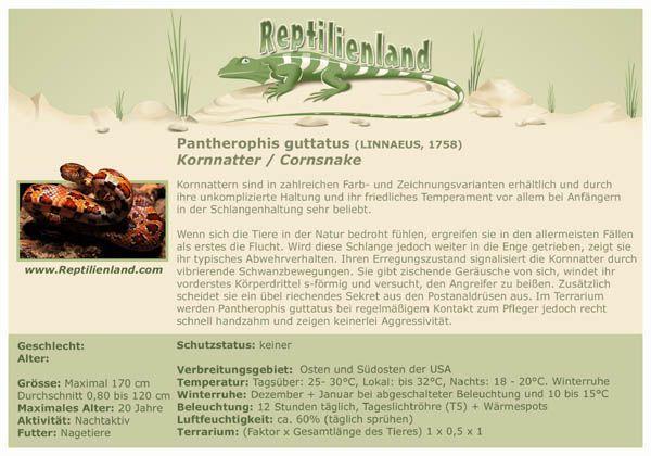 Kornnatter - kompakte Übersicht der Haltungsbedingungen. Unsere Reptilien Karteikarten können auch zur Beschriftung von Terrarien verwendet werden. Mehr unter www.Reptilienland.com