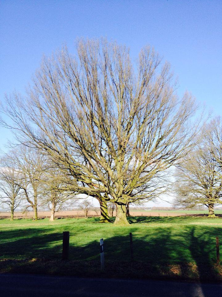 EIN TRAUM VON BAUM. DREAM TREE in Pulheim Orr