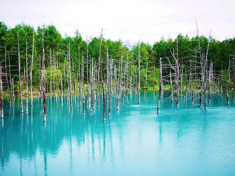 美しく不思議な青の世界!美瑛の神秘「白金青い池」(北海道)