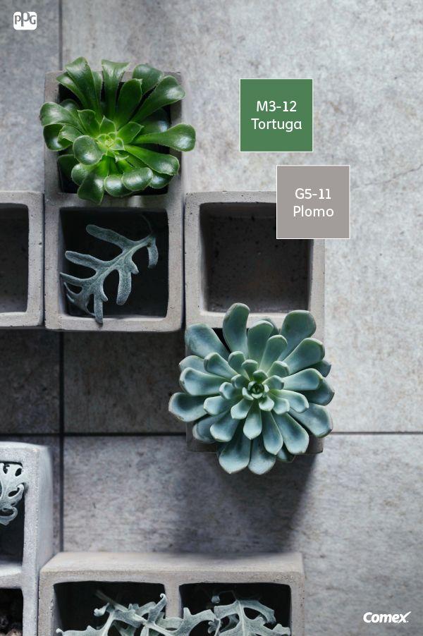 Decora con cuadros vivos para darle contraste a esa pared neutra. ¡Será un espacio más agradable para estar y convivir! #ComexTips #Plantas #Sensaciones #Constraste #Vida