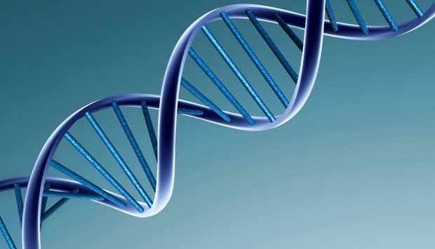 Saudi Arabia Map Genetic Codes The society - London : A new study has mapped the genetic code