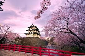 japan city cherry blossoms - Google Search