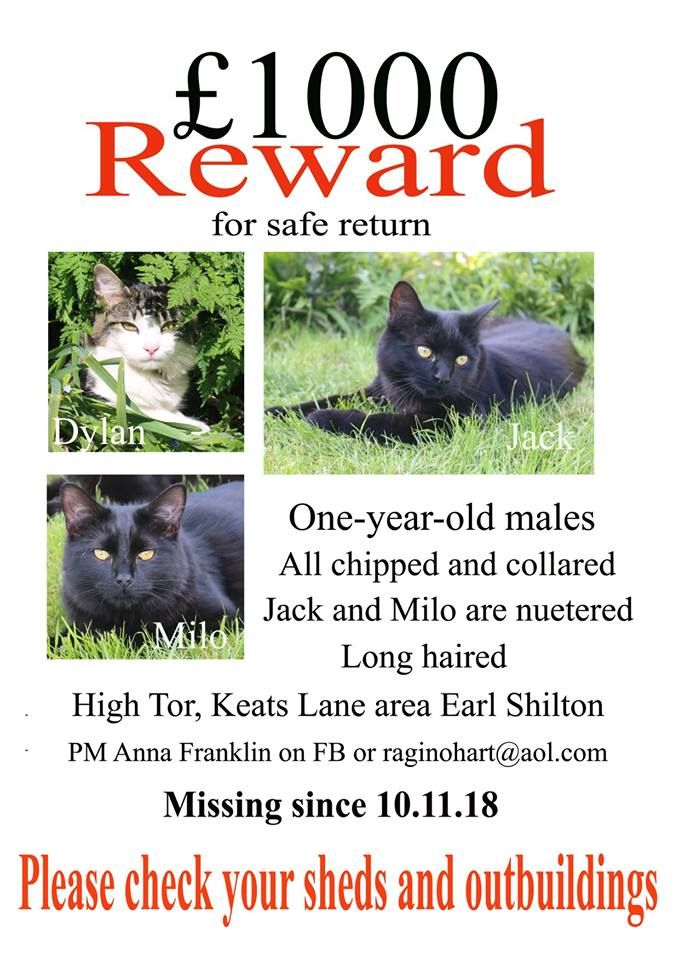 Reward Offered For Missing Cats From High Tor Earl Shilton Hinckley Nuneaton Black Cats White And Tabby Cat Long Haired C Long Haired Cats Tabby Cat Cat S