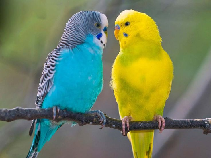 попугаи фото - Поиск в Google