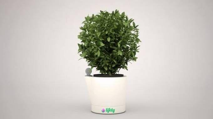 Il vaso WiPot lifely, idea del tema Lifely (da sinnovasardegna.it)