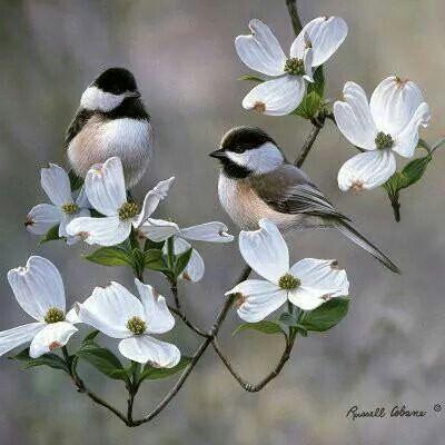 Natureza - pássaros - casal - birds (?)