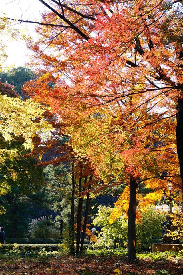 東京都の皇居東御苑の2017紅葉情報。例年の色づき時期や見頃、地図・天気・交通アクセス情報はもちろん、ライトアップ日時やイベントなど開催情報をご案内。クチコミ・穴場情報も募集しています。