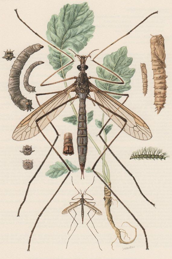 127 best Insect Anatomy images on Pinterest   Insects, Bugs and ...