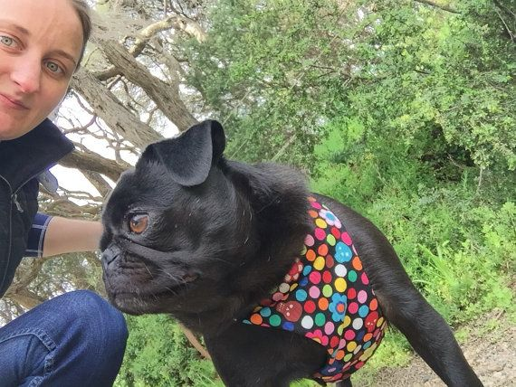 Flowers and skulls Dog harness modeled by Phoebe the Pug!