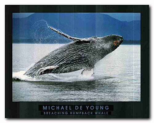 Breaching Humpback Whale Ocean Wall Décor Art Print Poste... https://www.amazon.com/dp/B01LYQCPN3/ref=cm_sw_r_pi_dp_x_T.m9xbXBTXQDF
