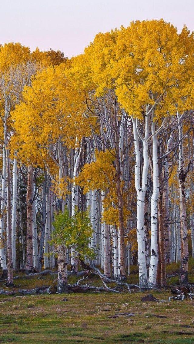 545 Best Trees Bark Amp Wood Grains Images On Pinterest